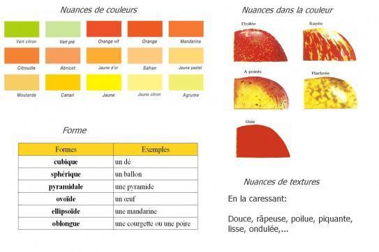 image citrouille.jpg (0.2MB)
