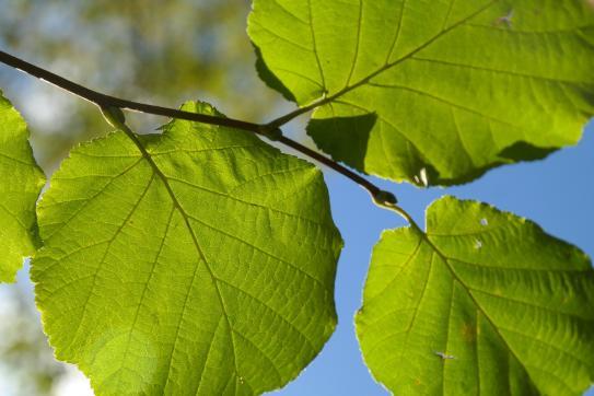 image 15_leaf228052_1920.jpg (0.6MB)