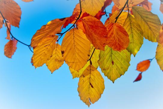 image 25_leaves3821723_1920.jpg (0.5MB)