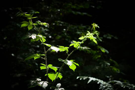 image 26_undergrowth2450353_1920.jpg (0.3MB)